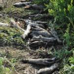 внутренности и конечности животных разбросаны по берегу канала