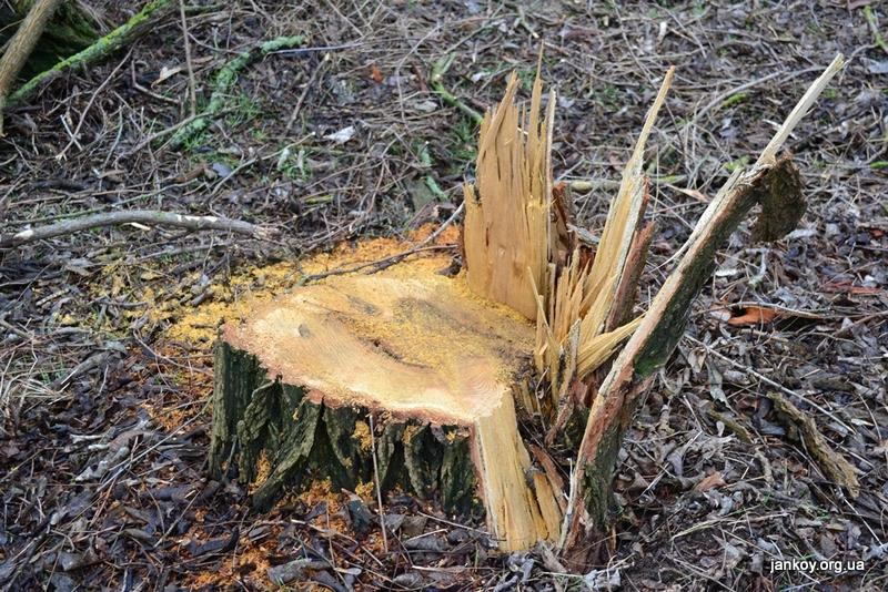 Вырубка лесополосы (36)