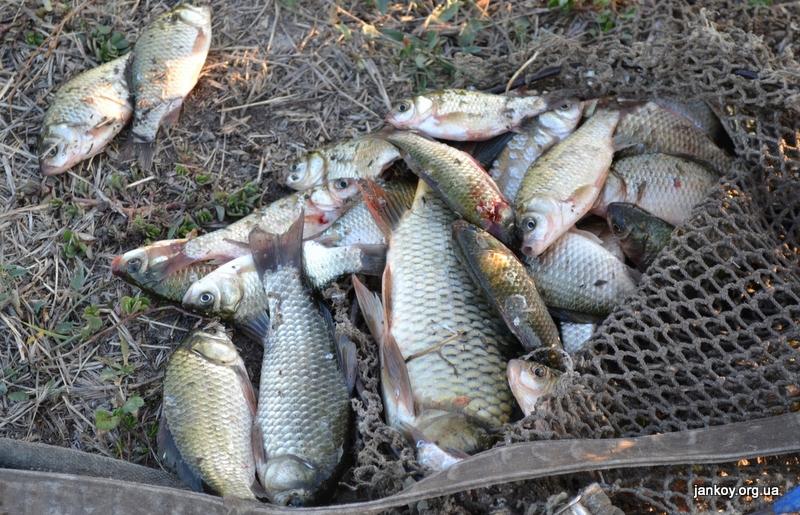 рыбалка на толстолоба в белореченском районе